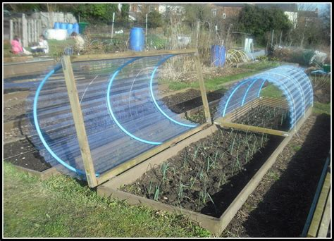 1000  images about Allotment on Pinterest   Crop rotation
