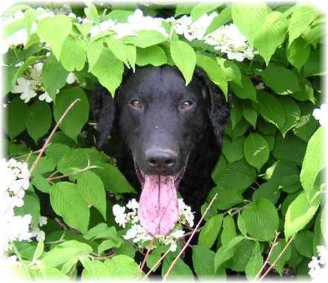 are acorns poisonous to dogs poisonous plants affecting dogs