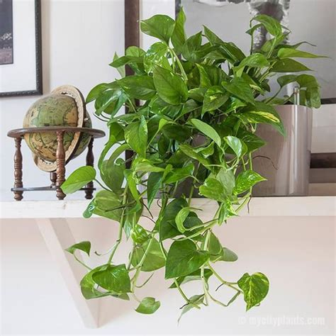 clean breathable air    indoor plants
