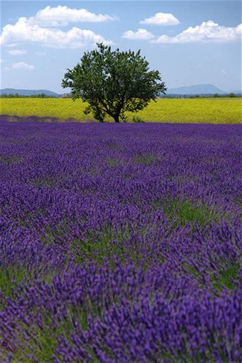 colors of provence 1000 ideas about provence lavender on pinterest