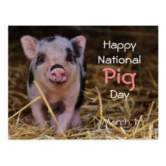 happy pig day pig postcards zazzle com au