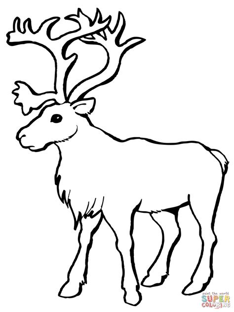 caribou color reindeer coloring faces coloring pages
