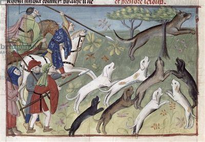 ms 367 480 fol 167v the wolf hunt from livre de la chasse by gaston phebus de foix vellum