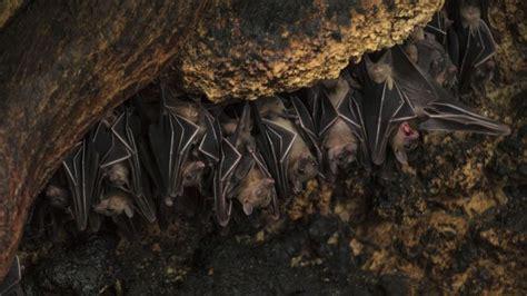 do bats hibernate and migrate reference com
