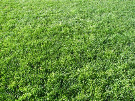 grass texture ii by kelhemp on deviantart