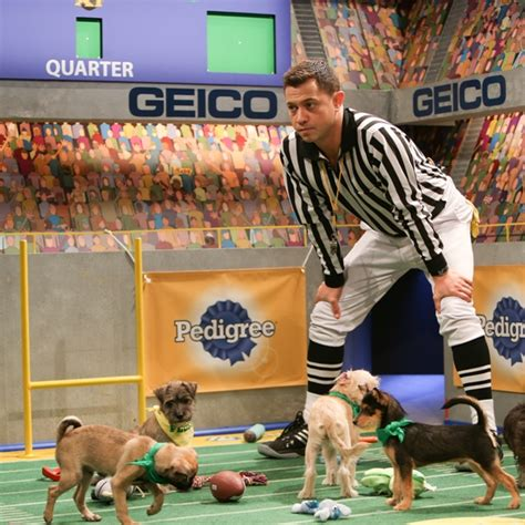 puppy bowl 2017 live we are live bey hitchcock fired the puppy bowl s dan schachner insidestl