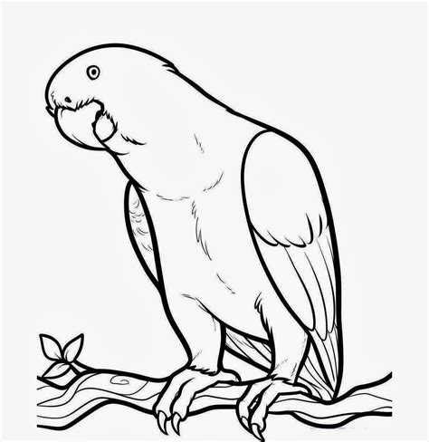 Drawing Wallpaper Beautiful Bird Parrot Coloring Colour Draw Pictures Of Birds Litle Pups Drawing For To Color