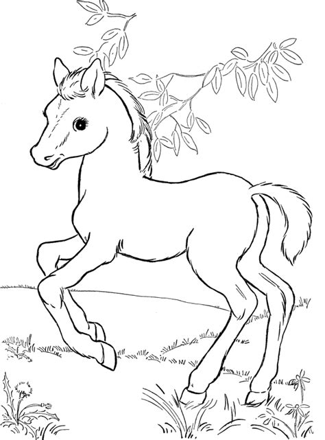 coloring pages of baby horses cute horse coloring pages for kids coloring pages of