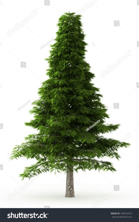 images of trees 3d deodar tree isolated white stock photo 102916415