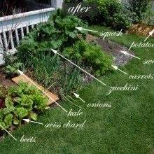 Yard on pinterest front yard gardens front yards and vegetable