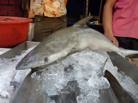 baby shark original video baby shark photo