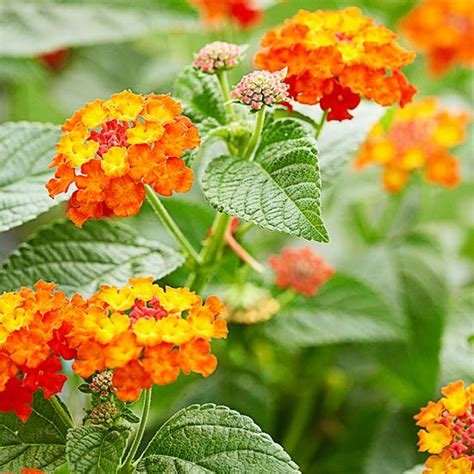 colorful flowers picture orange flowers in bloom light best orange flowers for your garden