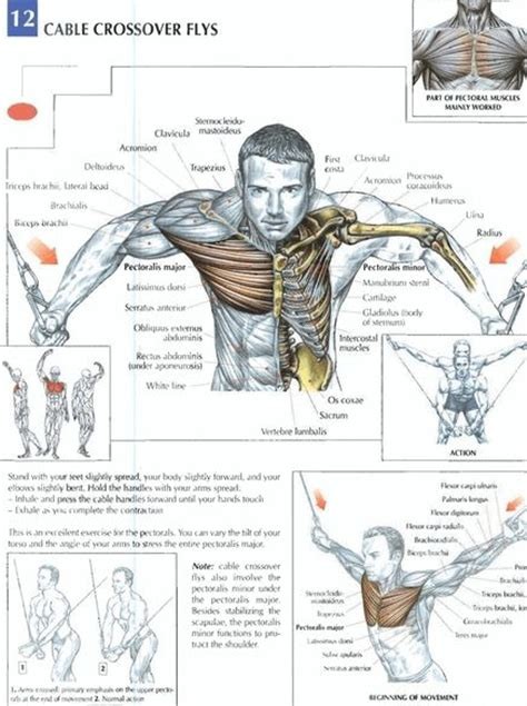 the 15 best chest exercises 15 best 2016 upper body chest cable crossovers images on