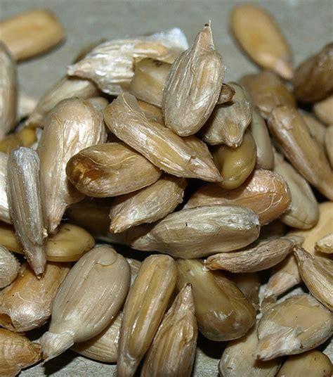 sunflower seeds without shells flickr photo sharing