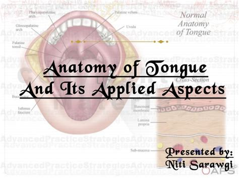 Anatomy Of The Tongue Slideshare | tongue ppt
