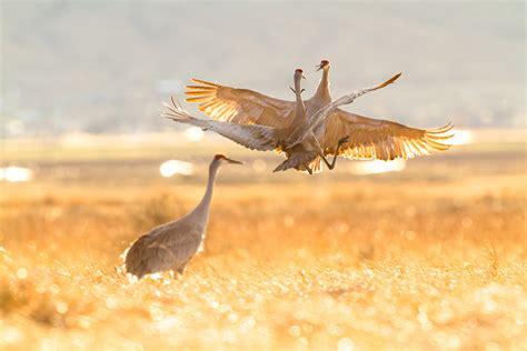 audubon jason savage photography
