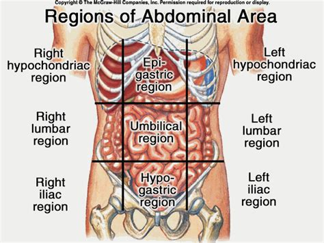 abdominal sections ap notes