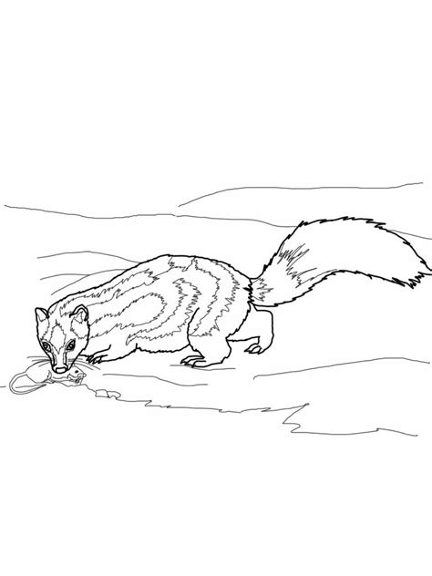 coloring book page of a skunk free printable skunk coloring pages for kids