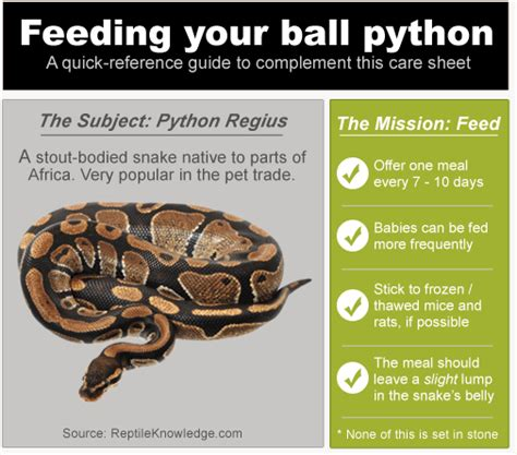 7 Techniques On Caring For A Python by Python Feeding Tips How To Feed Your Pet Snake