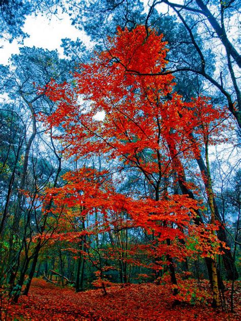 why leaves turn color in the fall why leaves change color in fall earth earthsky