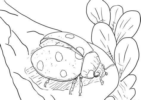 realistc cougar coloring pages printable realistc best realistic ladybug coloring pages coloringstar