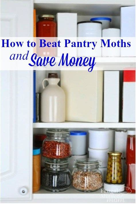 How To Keep Moths Out Of The Pantry by 17 Best Ideas About Pantry Moths On Clean