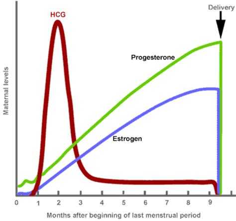 how long does mood swings last in pregnancy postpartum hair loss and hair tourniquet syndrome