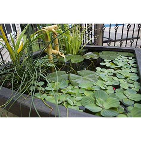 Aquascape Patio Pond by Aquascape 78049 Aquatic Patio Pond Water Garden 22 Inch