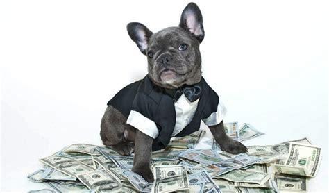 cost  groom  dog diy dog grooming