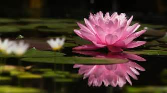Royal Lotus Royal Lotus When I Am Twentysomething