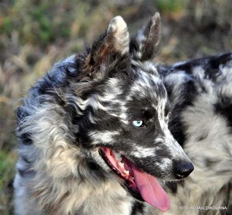 rare dog breeds puppies 19 unusual dogs that ll inspire you to adopt today