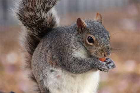 keep squirrels away from fall bulbs new england today