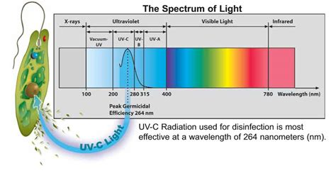 uv ballast wiring diagram fluorescent light ballast