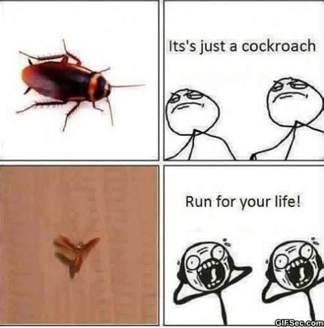 Roach Meme - flying cockroach meme 28 images funny pictures about