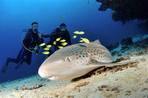 maldives dive scuba diving in maldives dive the world vacations