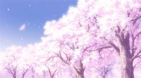 cherry tree anime trees cherry blossom trees anime amino