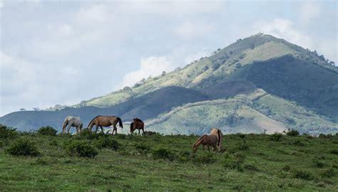 imagenes de animales naturales disfruta de las imagenes de paisajes naturales con