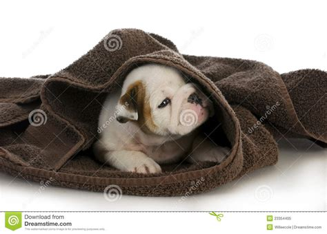 puppy bath time puppy bath time royalty free stock photo image 23354405