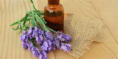 Minyak Esensial Lavender ini 6 manfaat baru minyak lavender untuk kesehatan