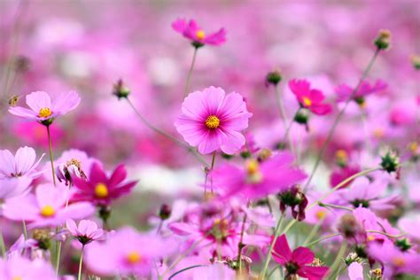 wallpaper flower full size awesome beautiful desktop wallpapers of flowers high