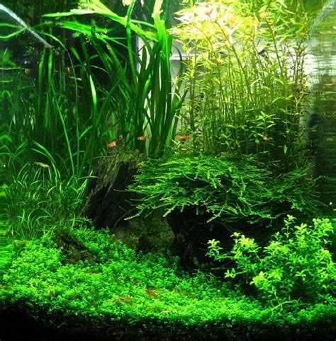 setting aquascape best 25 nano aquarium ideas on pinterest