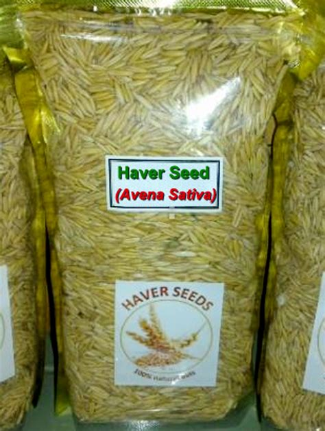 Jual Pakan Burung Blackthroat biji oat haver sebagai pakan alternatif