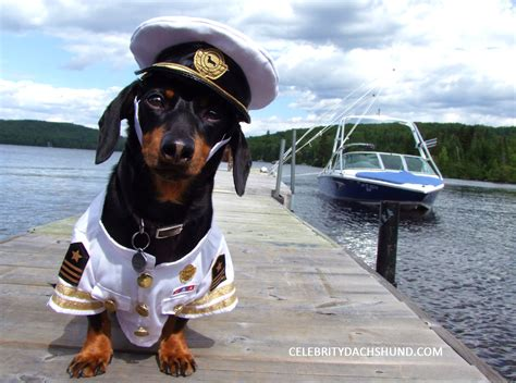 dog on boat quotes boat captain quotes quotesgram