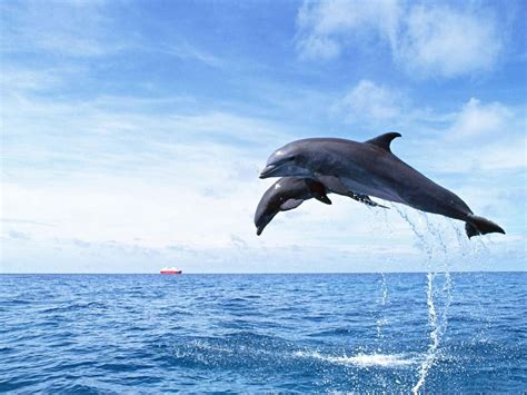 google images dolphins dolphin wallpaper android apps on google play