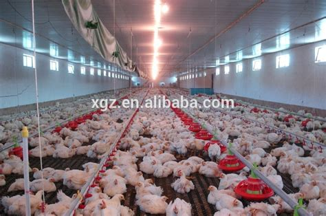 modern poultry house design modern poultry farm house design drawing with automatic