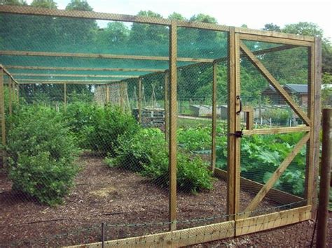 fruit tree cage 13 best images about fruitcage on gardens the