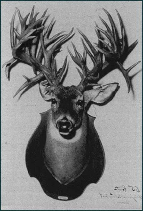 World Record Deer Rack by World Record For Points On Buck