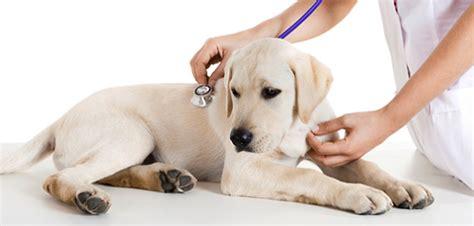 medicina interna specializzazione medicina interna veterinaria a