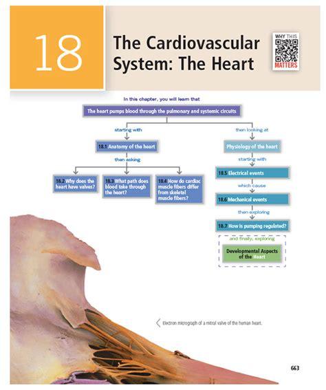 universitybeats compearsoneducation reproductive system marieb hoehn human anatomy physiology 10th edition