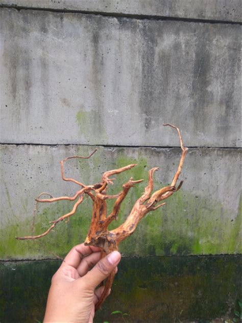 jual akar kayu rasamala ukuran  aquascape  lapak